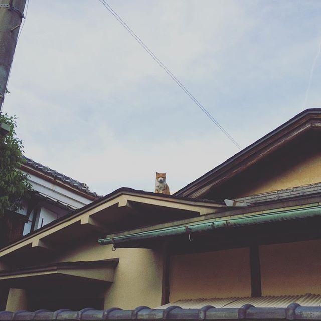 屋根に猫。ミュンヘンて どんな所だろう。僕は僕。ミュンヘンはミュンヘン。