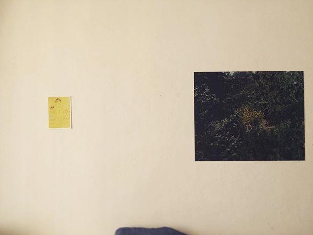 「13 の壁」y の写真 と ホホホ座の母展。