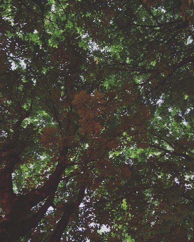 葉っぱの屋根
