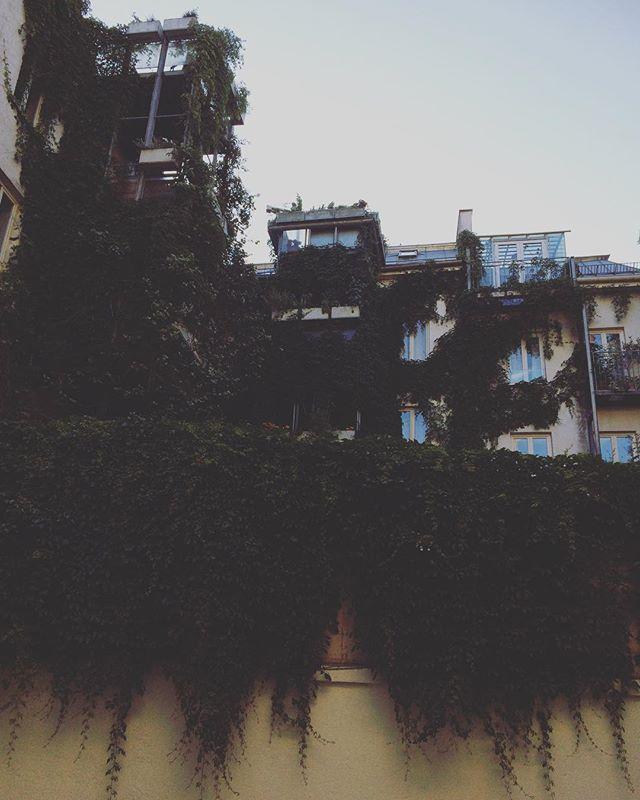 lothringer13halle の隣のアパート。緑と共存。蔦。蔦。