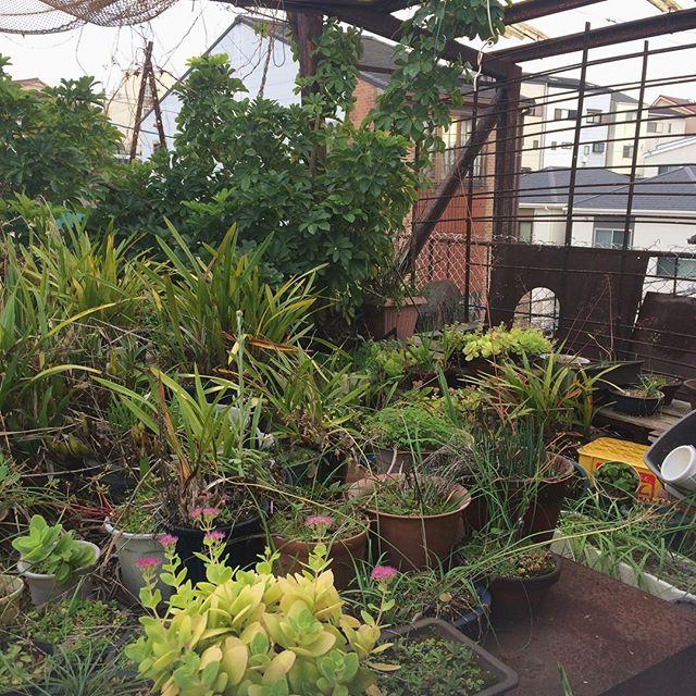 おかき 翁の庭 2