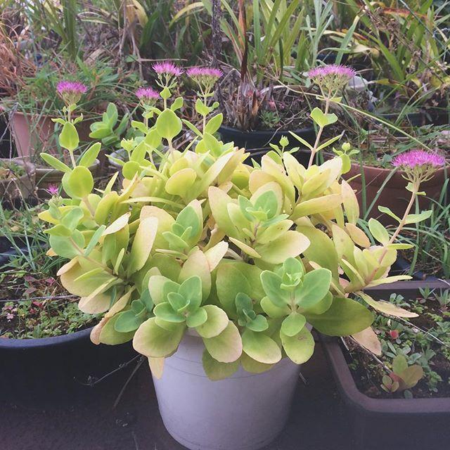 おかき 翁の花