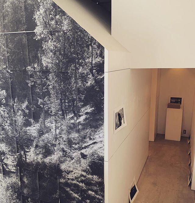"""kousagisha gallery.展覧会 初日。少し 搬入が遅れていますが、 僕を ミュンヘンに誘ってくれた イェルクさんとレネさんの 展覧会が 始まっております。 「厳密に時間に追われず、できる限り 自分達のリズムで 動くような様」それが 主義とかでも なさそうで、自然意識な感触。観に来てくれたお客さんには そんな状況を少し説明しながら 観てもらう。それは それで 1つのリズム。⌘⌘⌘⌘⌘⌘⌘⌘⌘⌘⌘⌘⌘⌘⌘⌘⌘⌘⌘⌘⌘⌘⌘⌘⌘HARBO_KOOPMANN写真展『秘めた力 - 浪費したエネルギー』 [時間]12時〜19時[期間]4月12日(金)~21日(日)[休廊日]月・火[場所]kousagisha  gallery(光兎舎)[オープニング]4月12日(金)17時~19時※お気軽にお越し下さい。 ◯いつの頃からか、私たちの文明においては、『エネルギー』といえば電気をすぐに思い起こし、『力』というと、地位や役割や支配を言い表す特徴となりました。アメリカの超越主義者ヘンリー・デイヴィッド・ソローは、このような資本主義的傾向を早くから批判した一人で、森の中に自作の小屋を建てて、しばらくの間、文明に背を向けました。ソローの後世の後継者ともいえる""""ツリーハッガー""""(急進的環境保護運動家)達は、現代世界ではノスタルジストだと嘲笑われましたが、挑発的な立場を取って、資本主義社会への""""オルタナティブな""""存在となりました。 ドイツ人とデンマーク人のアーティストデュオHarbo_Koopmann(ハルボ_コープマン)が、この4月、檜皮葺のような外壁で覆われた建物の中にある、小さな白い家風のKousagisha Galleryにて、写真展を開催します。二人はそこで、様々な多様性をアレンジし、『自然』について考え、思考の転換を図り、世界平和というユートピアに取り組みながら、原子力エネルギーのナイーブさに疑問を投げかけます。 ドイツ人写真家イェルク・コープマンは、2014年秋、ヴィラ鴨川に3ヶ月間レジデンス滞在しました。本展には、2014年の日本滞在時に撮影した写真も含まれています。[展示作家]Harbo_Koopmann(イェルク・コープマン/ドイツ、レネ・ハルボ・ペダーセン/デンマーク) ※本展覧会は、ゲーテ・インスティトゥート・ヴィラ鴨川の助成により行われます"""