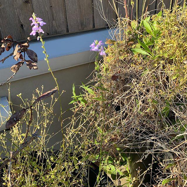 植物の淡々と 場をつくりあげていく様が好き。少し前は 場と分離していたのに。