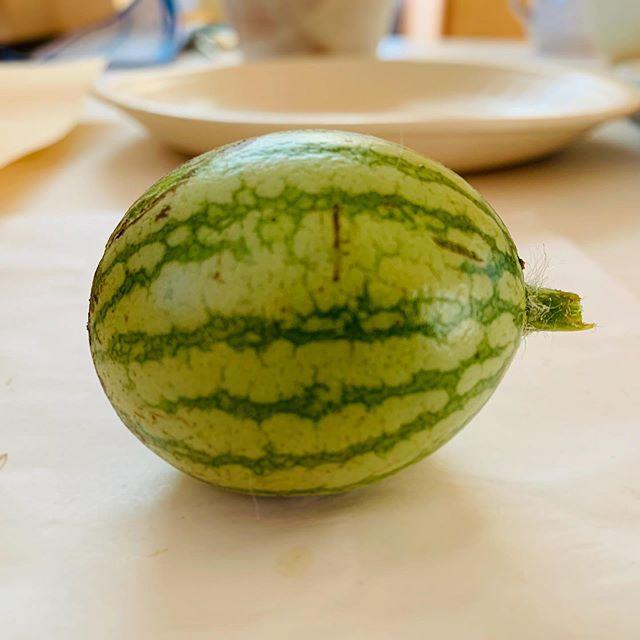 雑草屋上から 西瓜の実が とれた。この大きさで 腐っていきそうだったからとってみて 中をみたい。そしてまた 屋上に 植えるのだ。にひひ。