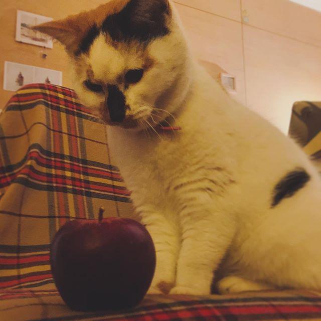 りんごとみゃーこ